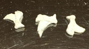 爪の骨 猫