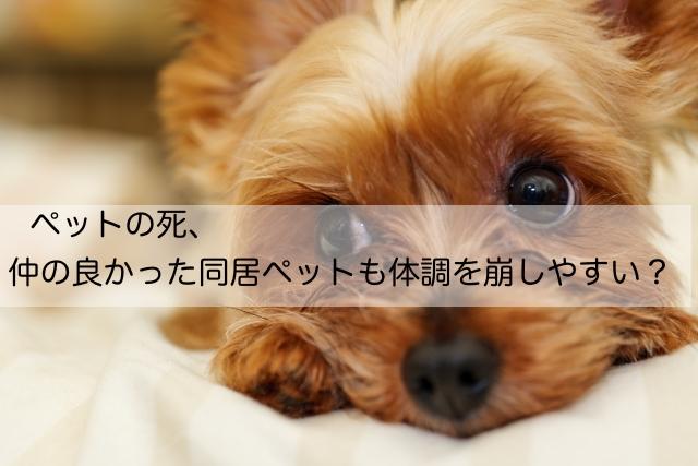 ペットの死、同居ペットも体調を崩す