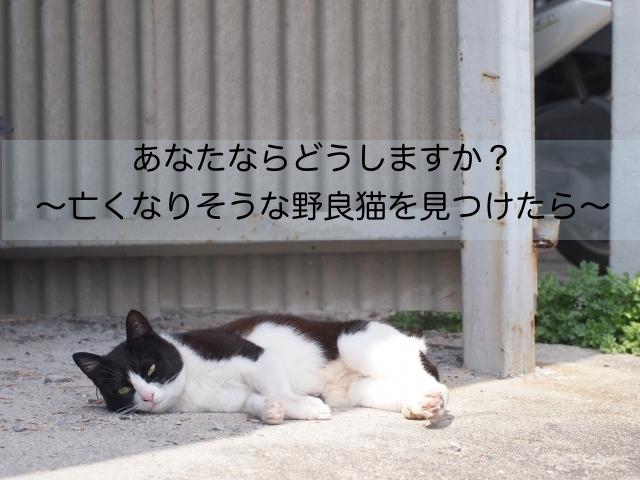 死にそうな野良猫を見つけたら