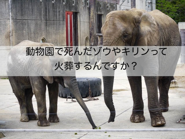 動物園で亡くなったゾウやキリンは火葬できるの