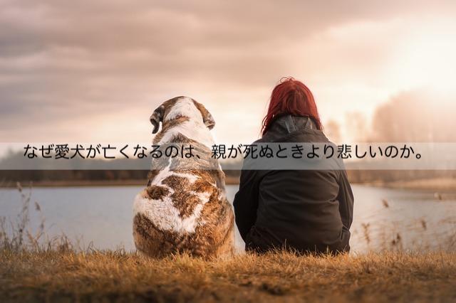 なぜ愛犬が亡くなるのは、親が死ぬときより悲しいのか。